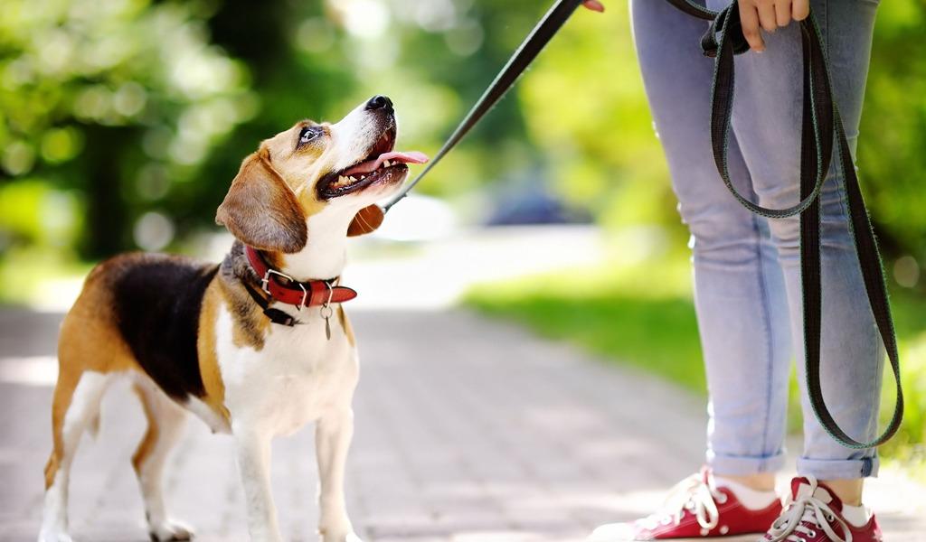 ¿Qué hacer para que su perro no tire de la correa?